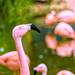 Flamingo Friday '19 12