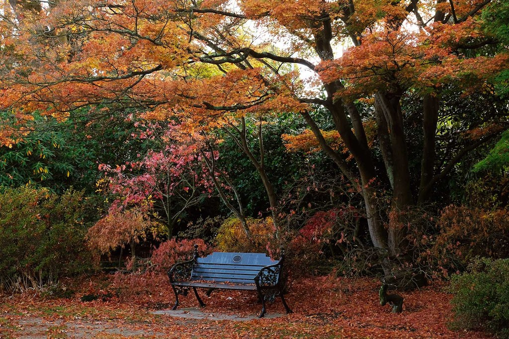 A seat in autumn by maureenpp