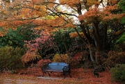 4th May 2019 - A seat in autumn