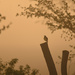 Meadowlark Sings in a Foggy Sunrise