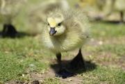 4th May 2012 - Aww, so cute!!