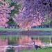 Goose by lynnz