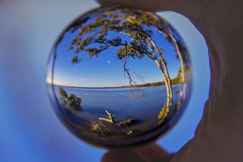 orb by corymbia