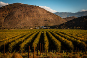 30th Apr 2019 - Autumn has arrived in Montagu