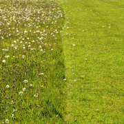 5th May 2019 - Mown...