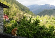 29th Apr 2019 - Catty Valley