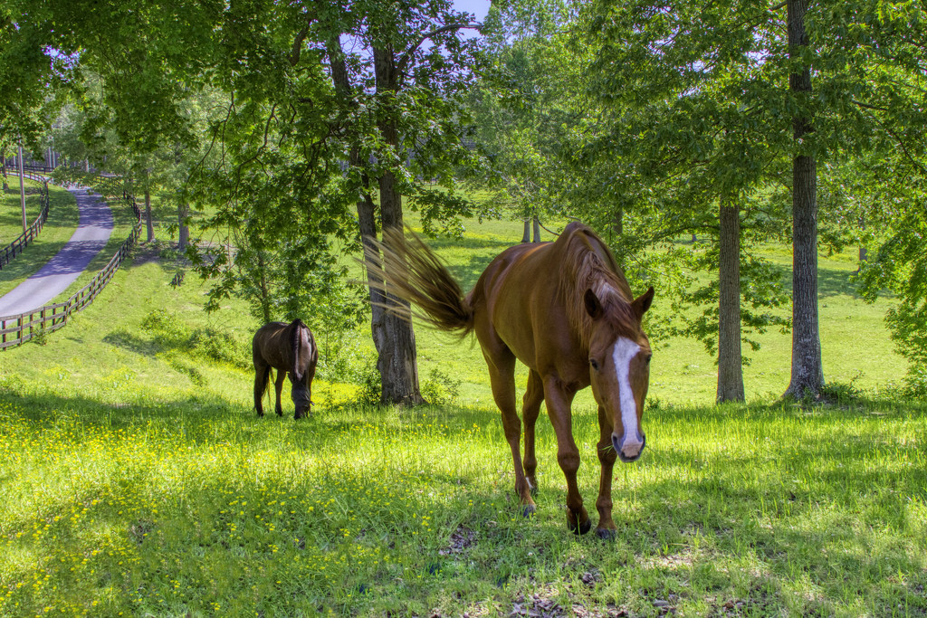 Grazing Time by kvphoto