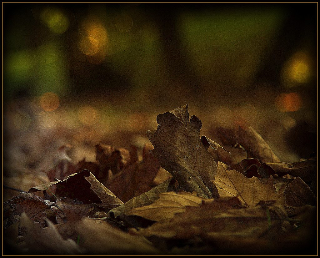 Autumn leaves by dide