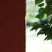 Half and half house and lilac bush