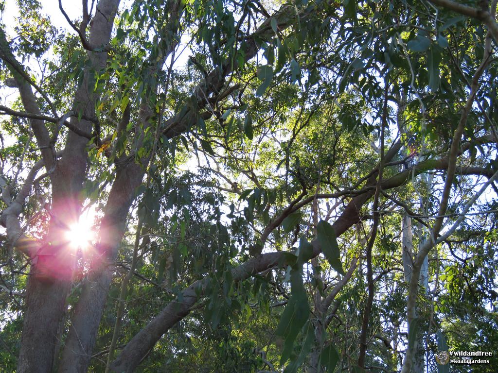 Can you see Jordan? by koalagardens