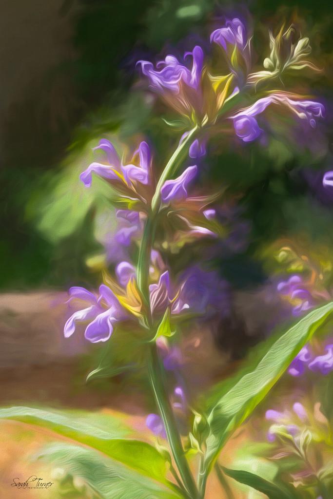 Sage Blossoms by samae