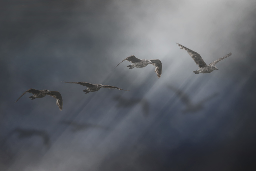 Seagull Madness by mikegifford