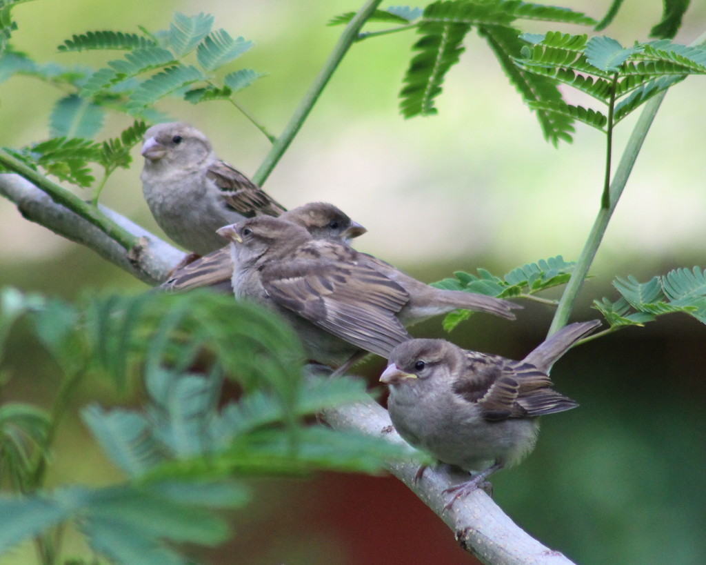 Getting My Sparrows In A Row by cjwhite