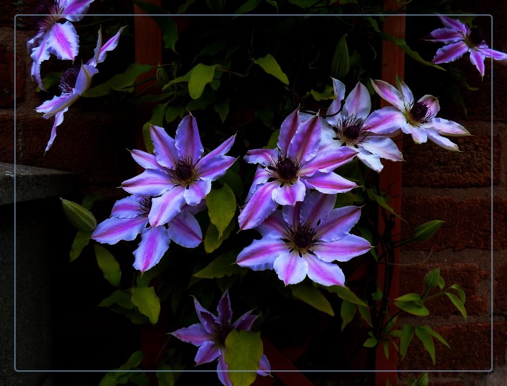 A glow in the dark by beryl