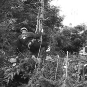 9th May 2019 - Lumberjack leaping from tree to tree