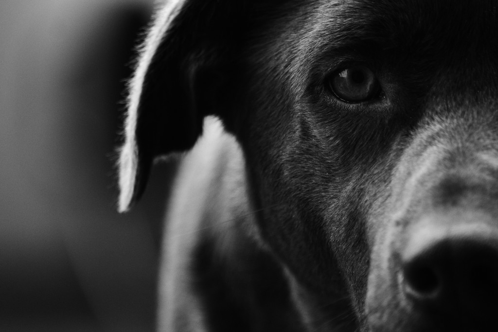 the dog by wenbow