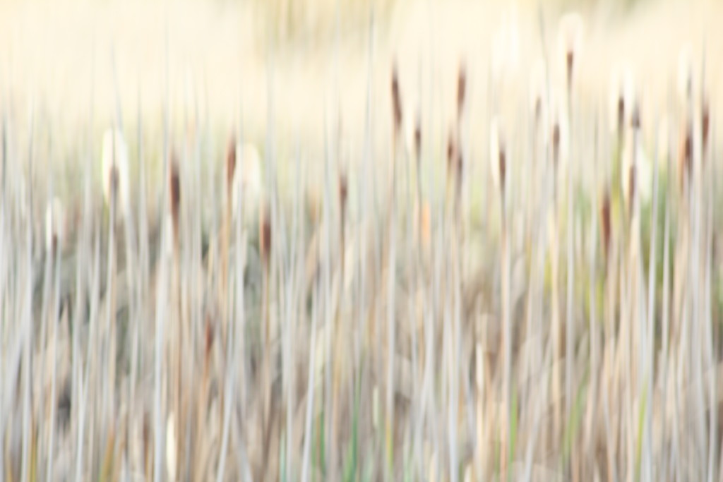 meadow reed by wenbow