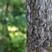 Half and half tree trunk
