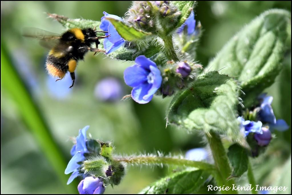 Full of pollen by rosiekind