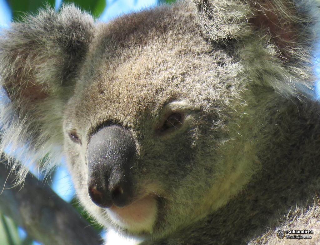 Soft light by koalagardens