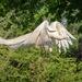 Gasp! A Flying White Peacock! by jyokota