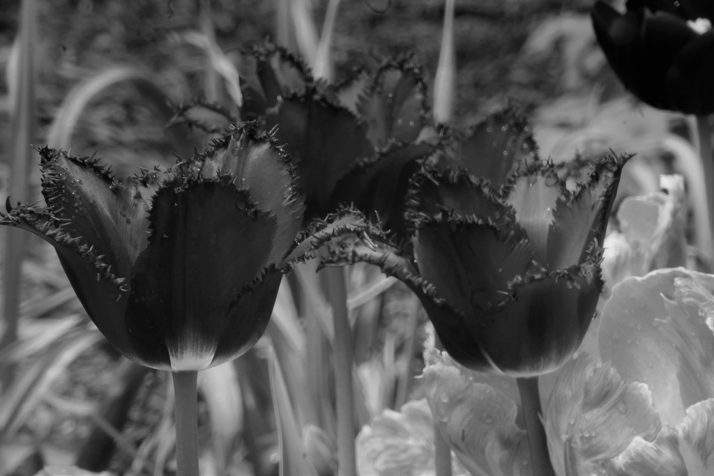 Flowers  by randy23