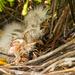 Snowy Egrets, Newborn! by rickster549