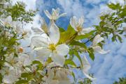 5th May 2019 - Blossom