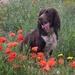 Le chien fleuri