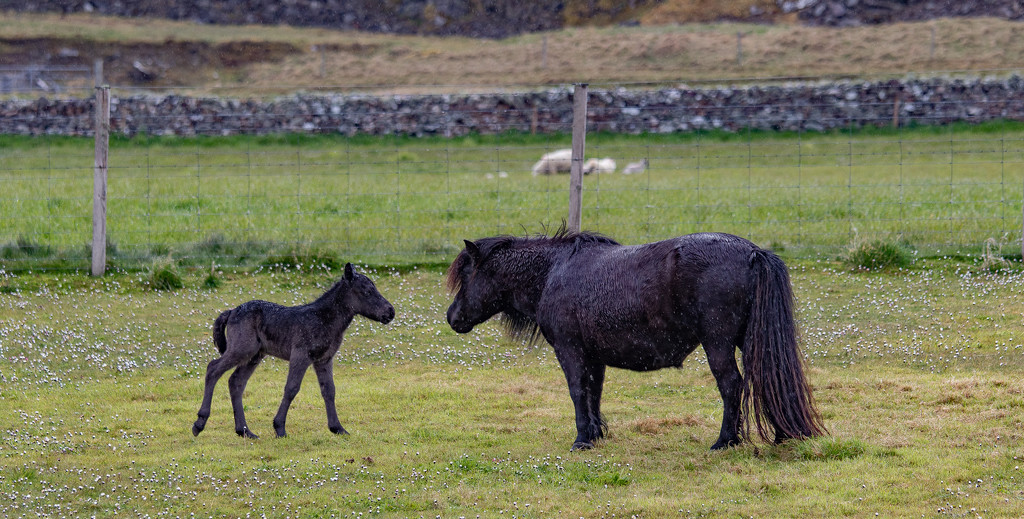Mother & Foal by lifeat60degrees