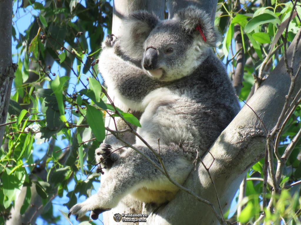 in style by koalagardens