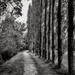 Tree-lined Pathway... by vignouse