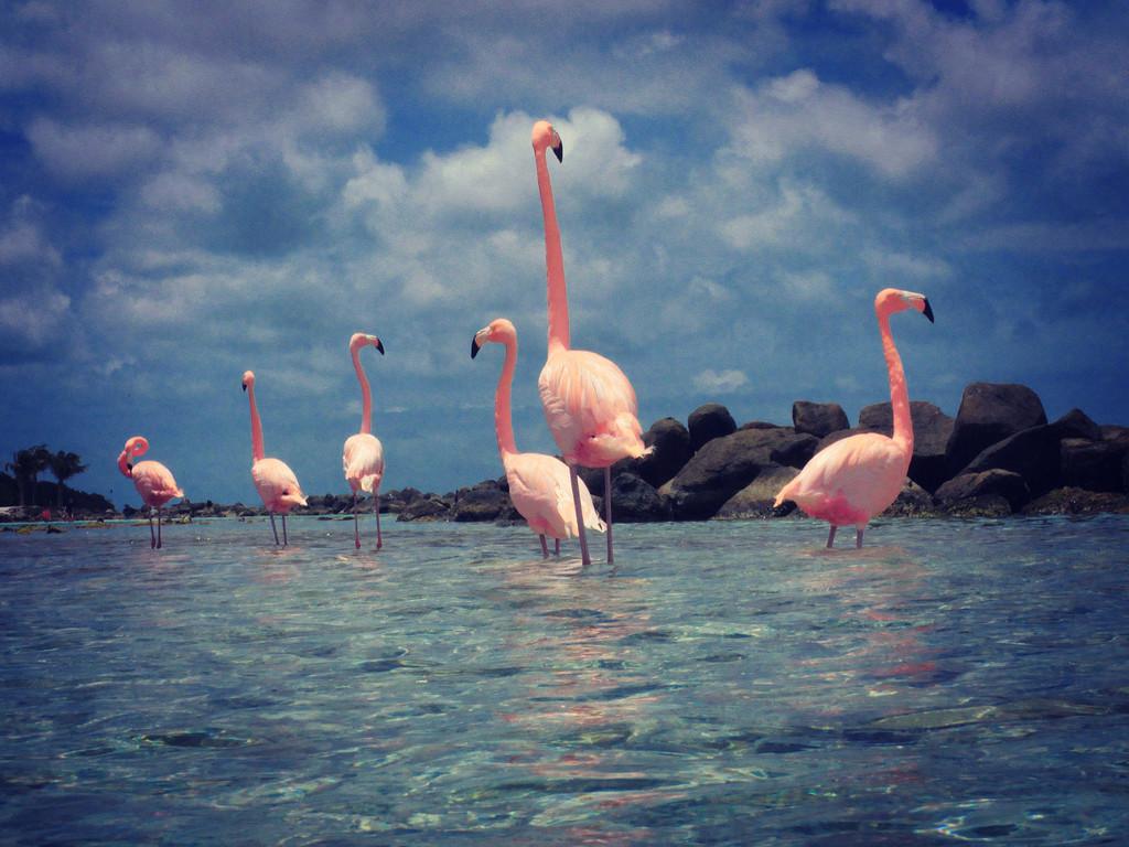 Flamingo Beach Aruba by pdulis