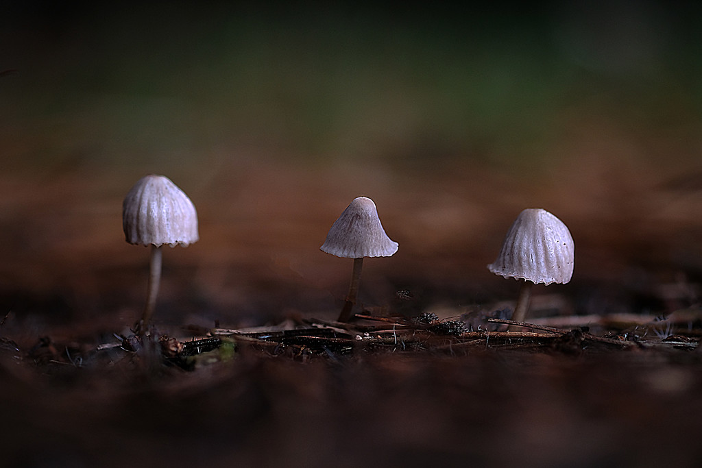 Trio by maureenpp