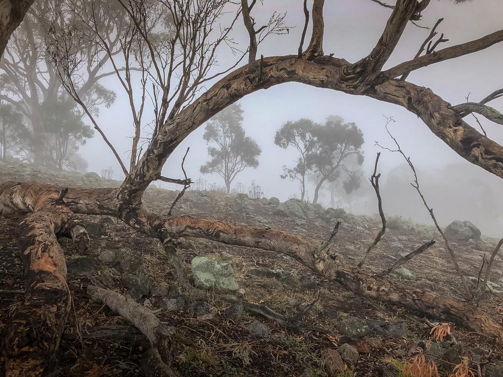 Foggy foggy dew by pusspup