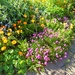 A riot of colour  by beryl