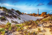 12th May 2019 - California Dunes in Aruba
