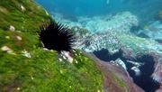 26th Apr 2019 - Sea urchin