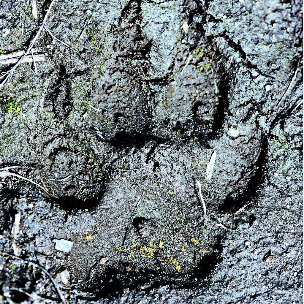 Muddy Tracks by farmreporter