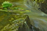 12th May 2019 - Leaves in the stream......