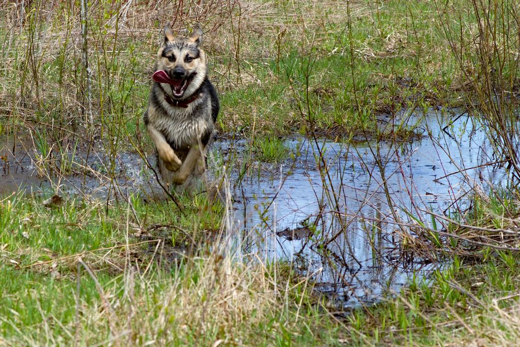 Water Dog by farmreporter