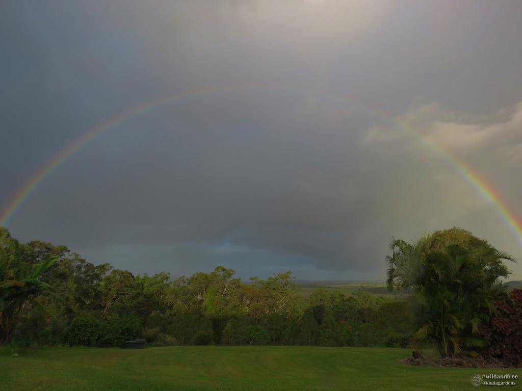 Rainbow by koalagardens