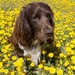 Le chien fleuri #2