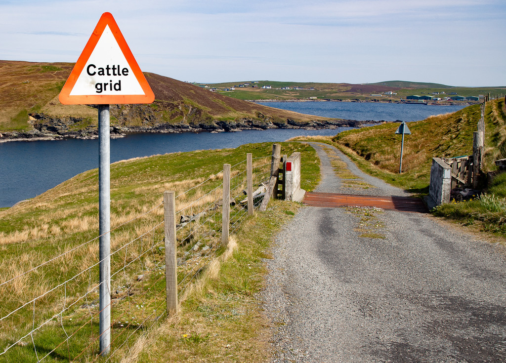 Cattle Grid by lifeat60degrees