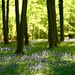 Bluebell Wood by phil_sandford