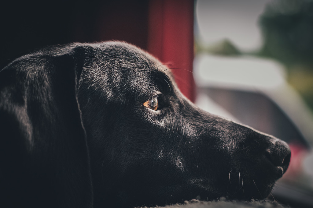 Riley waits by mamazuzi