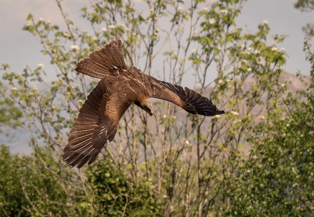 Kite Flying by ellida