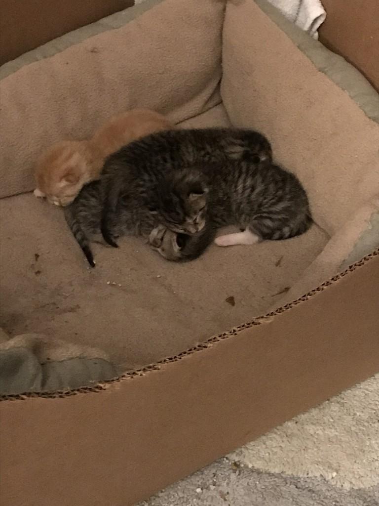 Kittens by tatra