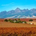 Autumn in the Winelands by ludwigsdiana