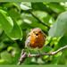 Angry Bird !!!